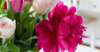 Z pivoněk jsou nejlepší kytice
