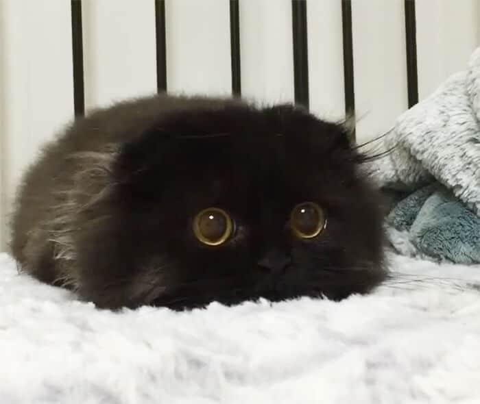 velký penis kurva moje kočička