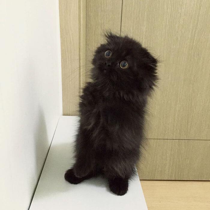 Černá kočička video tumblr