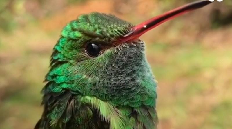 Kolibříci jejichž barvou budete fascinování a okouzlení