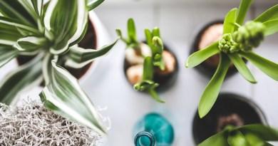 10 důvodů proč potřebujete více pokojových rostlin