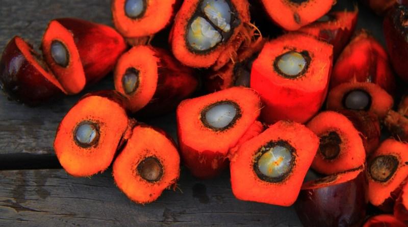 Palmový olej je karcinogenní a v potravě ho přijímáme všichni