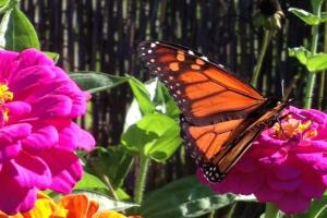 my butterfly on flower