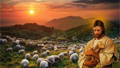 25 April 2021, Bacaan Injil 25 April 2021, Bacaan Injil Harian, Bacaan Kitab Suci, bacaan Pertama 25 April 2021, bait allah, Bait Pengantar Injil, Firman Tuhan, Gereja Katolik Indonesia, Iman Katolik, Injil Katolik, Katekese, Katolik, Kitab Suci, Komsos KWI, Konferensi Waligereja Indonesia, KWI, Lawan Covid-19, Mazmur Tanggapan 25 April 2021, Penyejuk Iman, Perjanjian Baru, Perjanjian Lama, Pewartaan, Renungan Harian Katolik 25 April 2021, Renungan Katolik Harian, Renungan Katolik Mingguan, Sabda Tuhan, Ulasan Eksegetis, Ulasan Eksegetis Bacaan Kitab Suci Minggu, Ulasan Kitab Suci Harian, Umat Katolik, Yesus Juruselamat, Minggu Kerahiman Ilahi, Pesta Paskah, Minggu Paskah IV