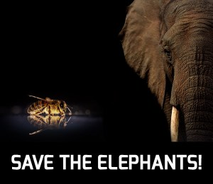 Save elephants with bees