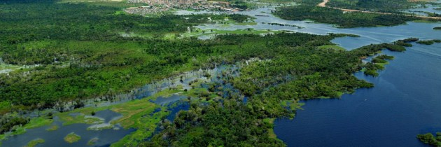 The Amazon Rainforest: A Key to Our Future