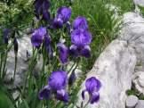 2-1-2-Biljke-022
