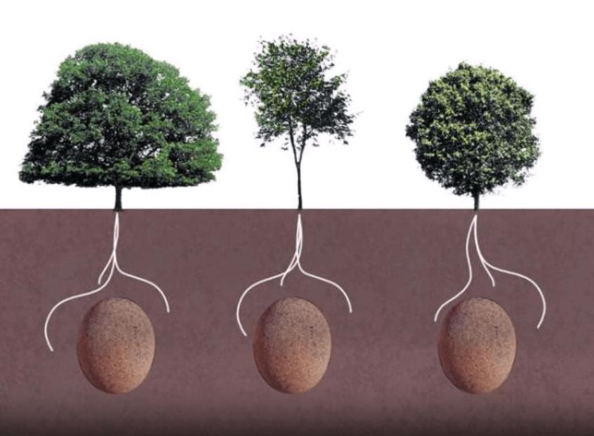 [VIDEO] Ovo bi moglo biti revolucionarno: Umjesto groblja, jedna tvrtka od naših preminulih želi napraviti šumu!