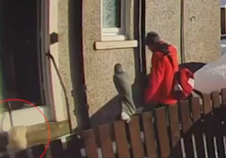 """[VIDEO] Umirovljenica pala u dvorištu, poštar joj odbio pomoći: """"Preumoran sam i hladno je"""""""
