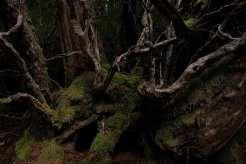 fujifilm xf 16mm f/1.4 sample images