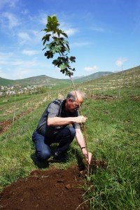 Outgoing director Tom Garabedian planting a tree in Arevashogh as part of the Living Century Initiative