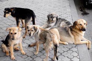 world-animal-day-yerevan-street-dogs_0-1