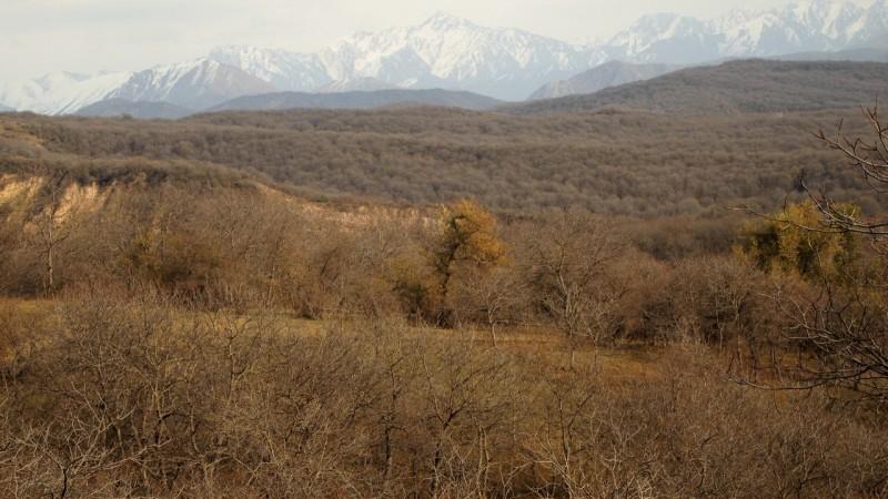 PA294692  Arslanbob, Kyrgyzstan, Kirgistán, walnut forest, bosque nogal