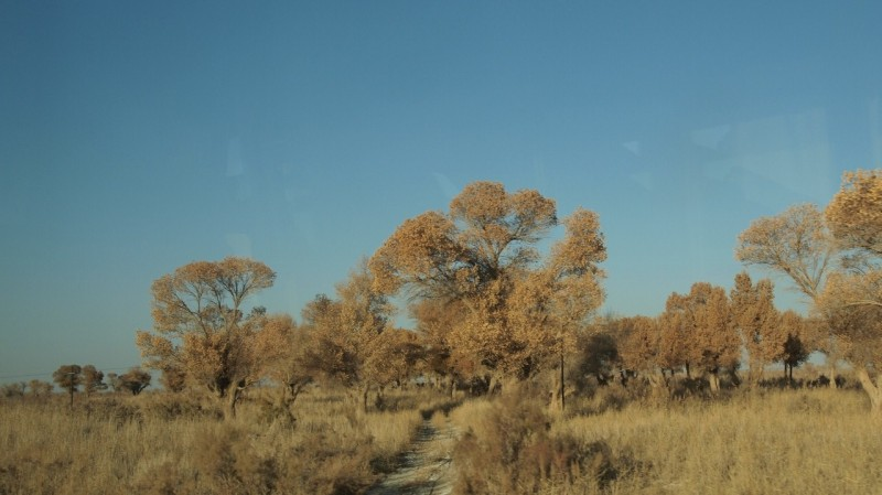 China, taklamakan, desierto, desert, Khotan, Turphan, Yarklan PB155646