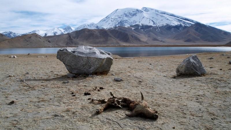 PB115327 China, Karakorum, karakul, silk road, ruta seda