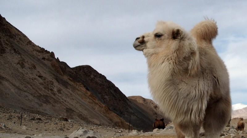 PB115350 China, Karakorum, karakul, silk road, ruta seda