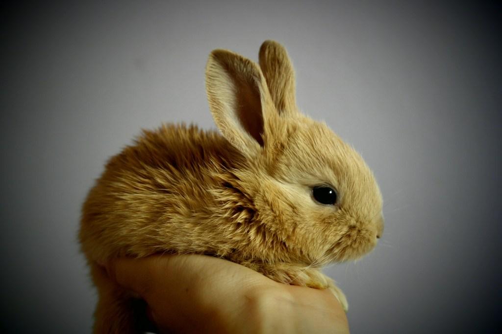 The Brave Little Rabbit