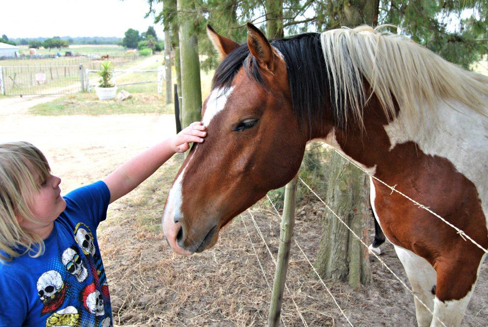 petting-pretty-horses