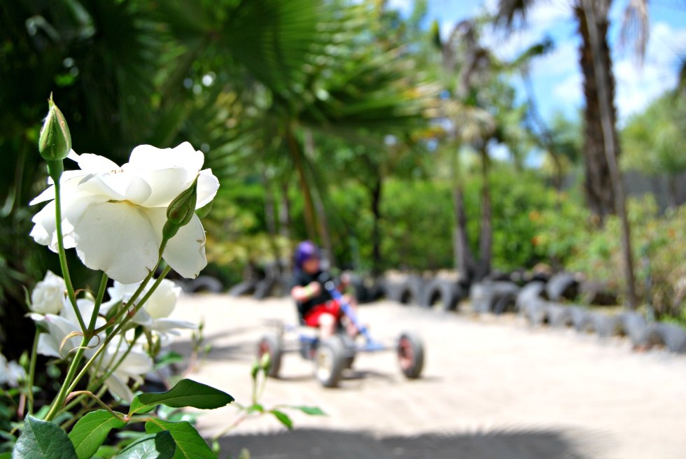 rose-cart