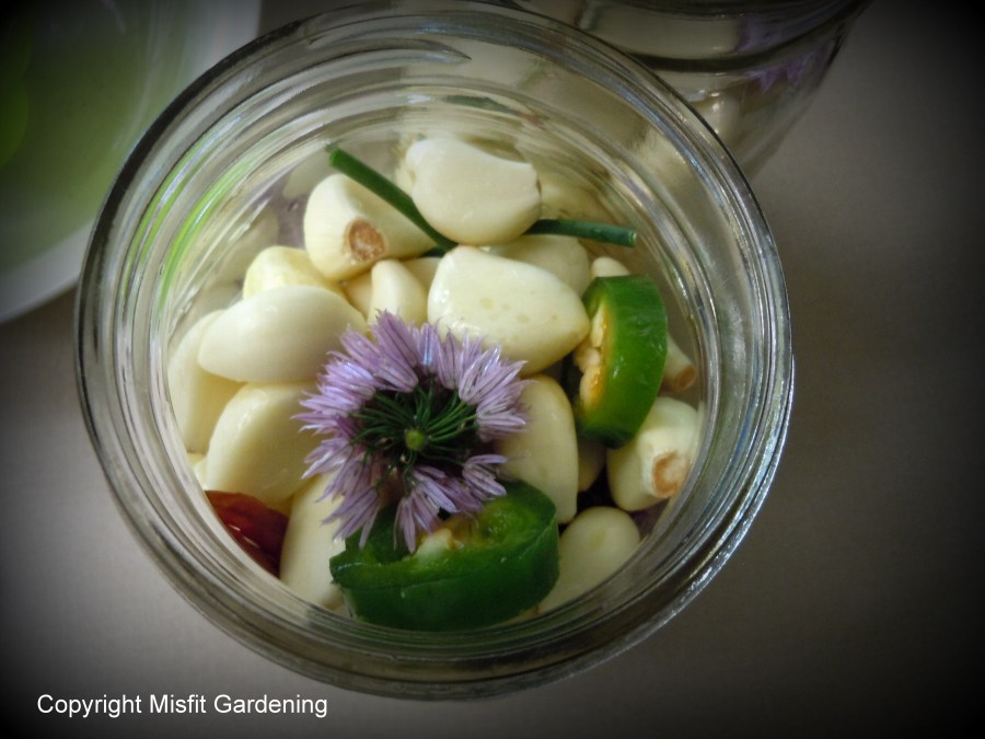 How To Make Pickled Garlic