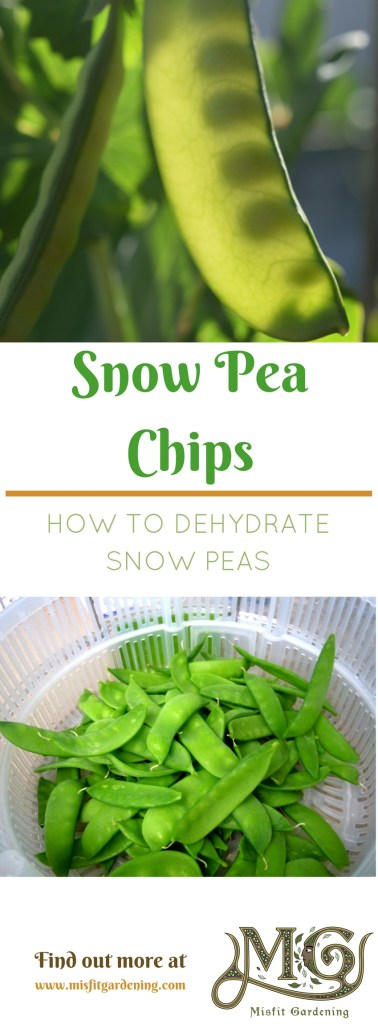Dehydrating snow peas in six easy steps. Click to find out more or pin it and save for later