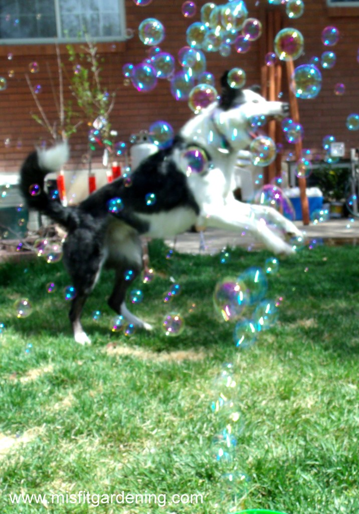 chasing bubbles3