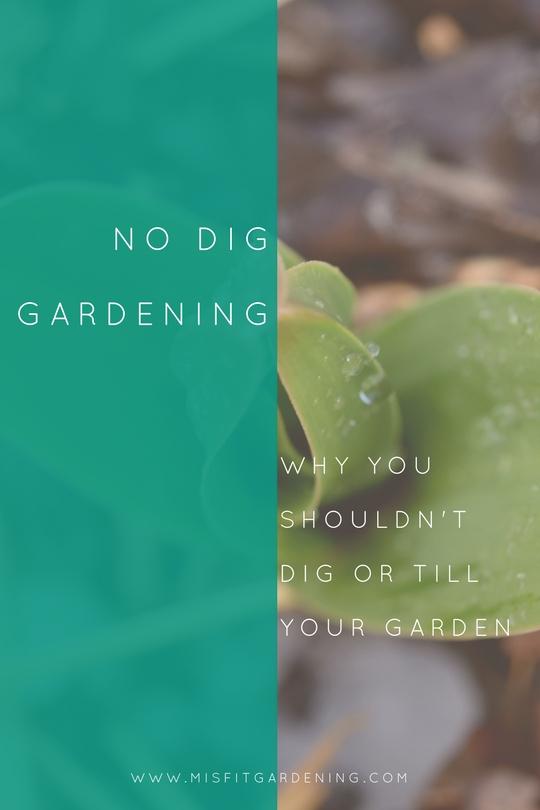 No dig gardening lasagne gardening