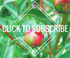 Subscribe to Misfit Gardening