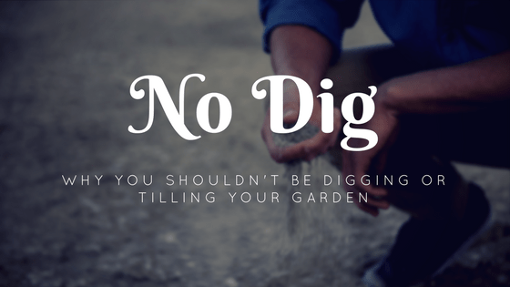 No Dig: Why You Shouldn't Be Digging Or Tilling Your Garden