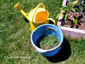Make your own homemade, natural liquid fertilizer from cut grass
