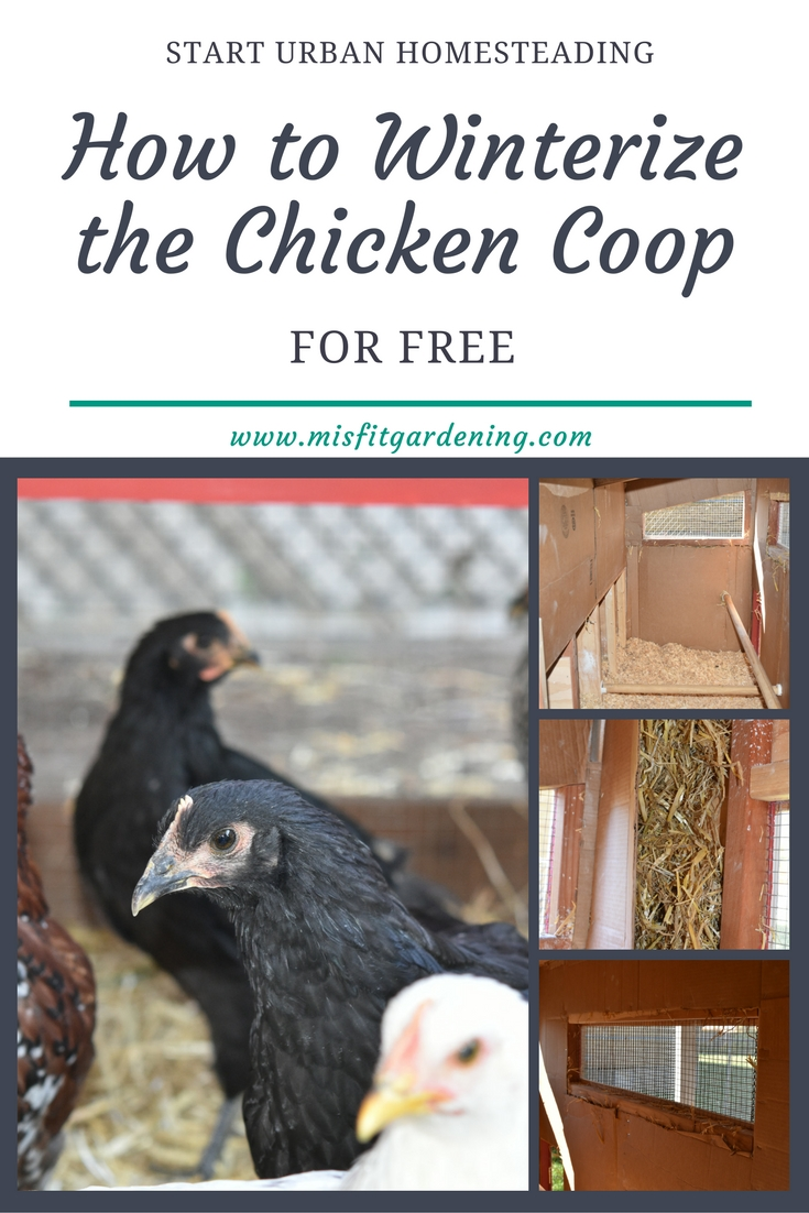 winterizing the chicken coop