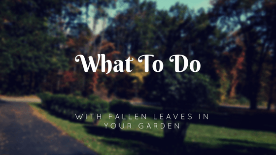 uses of fallen leaves in the garden