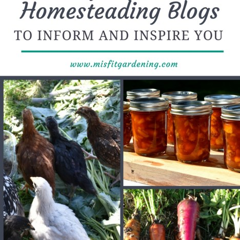 TOP 10 HOMESTEADING BLOGS