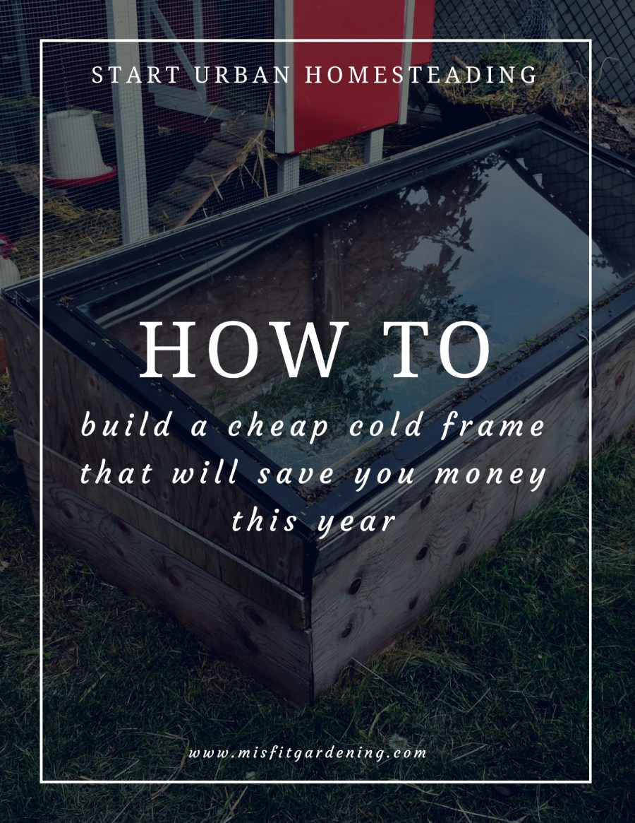 How to build a cheap cold frame that will save you money this year. Click to find out how to get started or pin it to save for later.