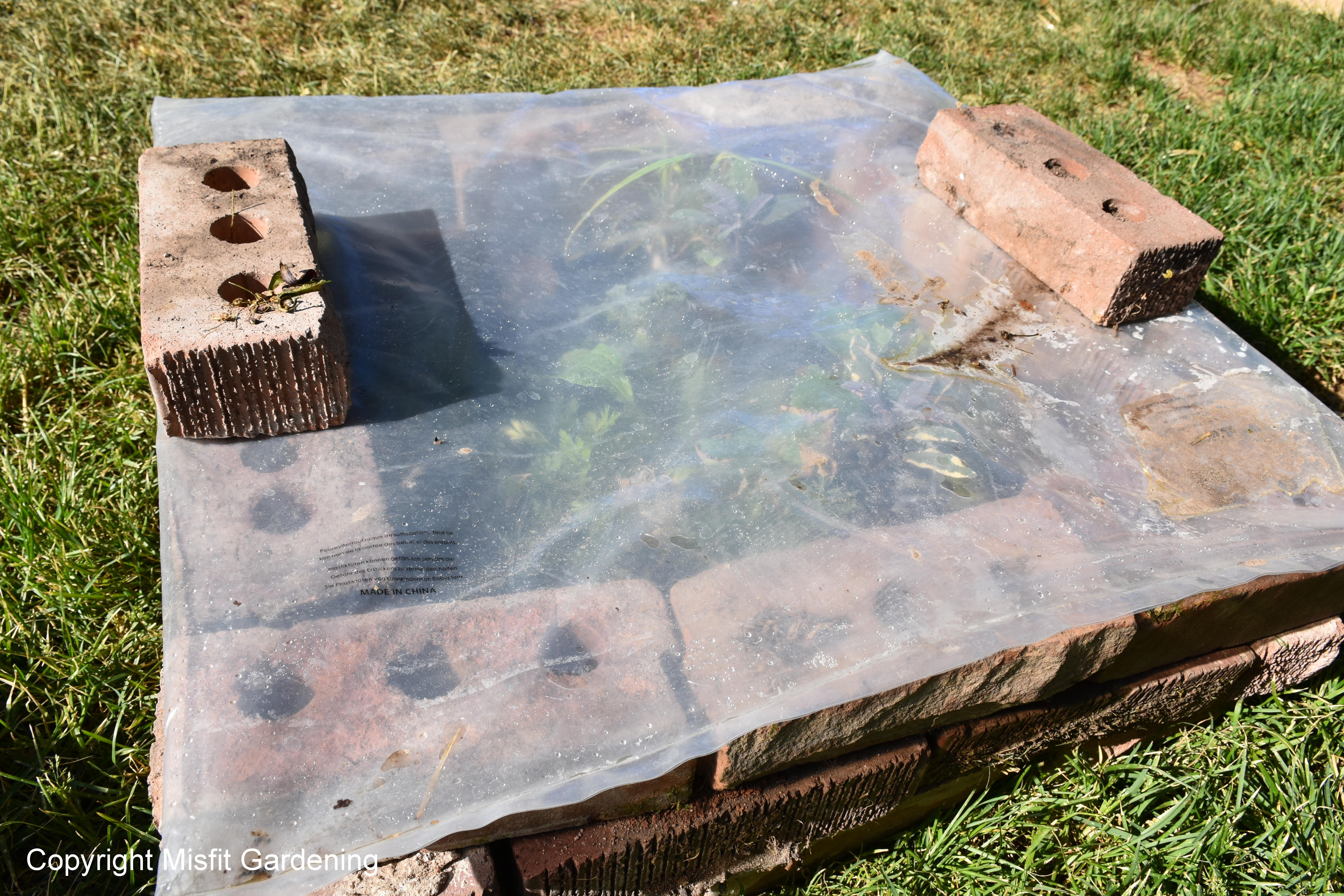 Build A Cheap Cold Frame That Will Save You Money This Year - Misfit