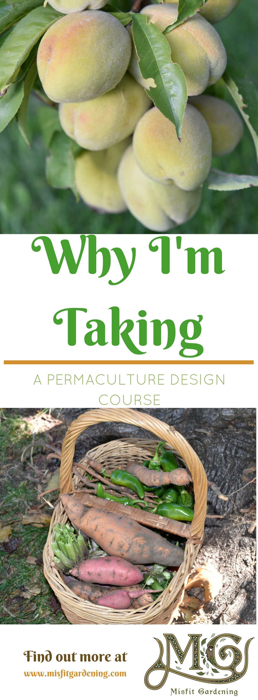 Find out Why I'm taking a Permaculture Design Course. Click to find out more or pin it and save for later