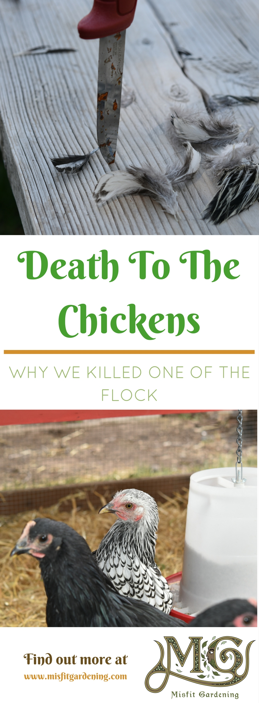Find out why we killed one of our chickens and how we did it. Click to find out more or pin it for later