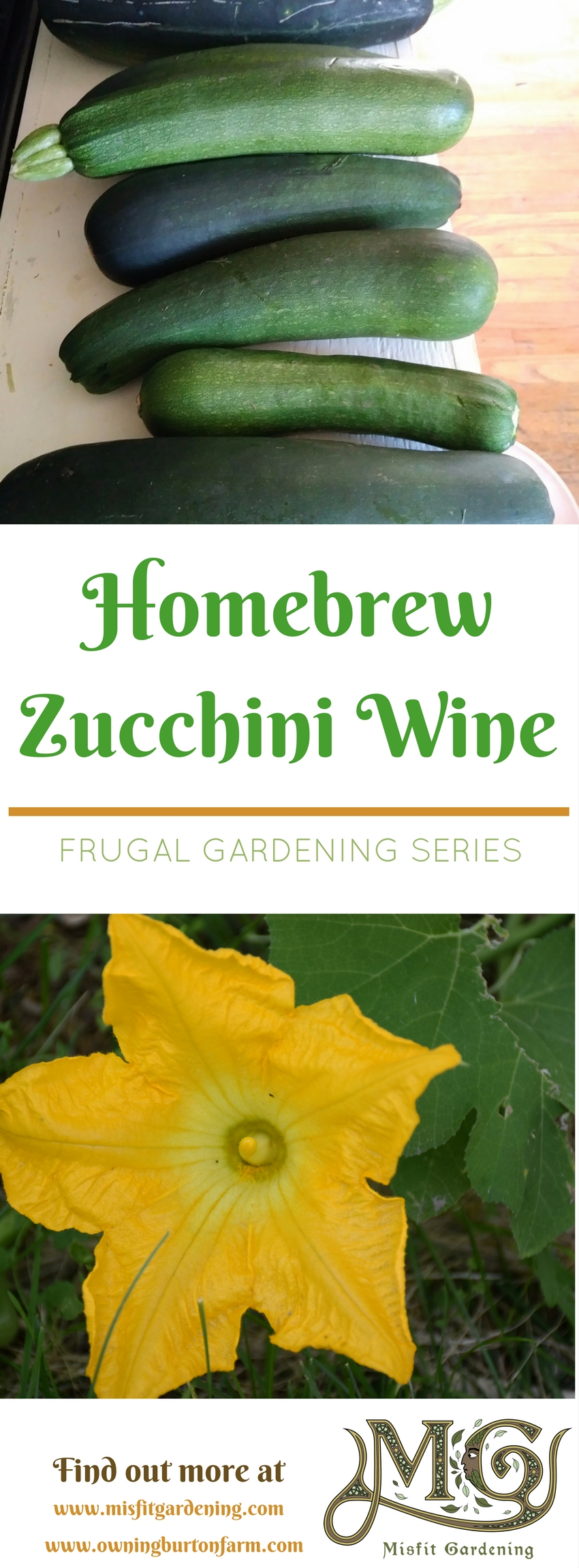 How to make Zucchini Wine a pretty good homebrew dry white wine at home. Click to find out more or pin it for later