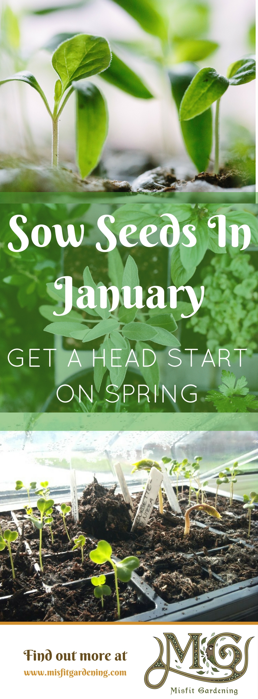 Get a head start on spring! Click to find out what plants you can sow in January or pin it for later