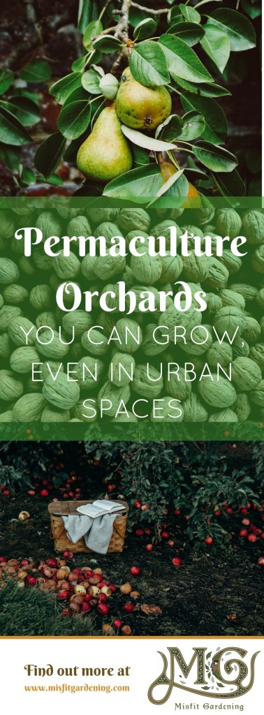 Orchard culture or permaculture orchards are a great way to bring food forests into your own backyard. Click to find out how or pin it and save for later