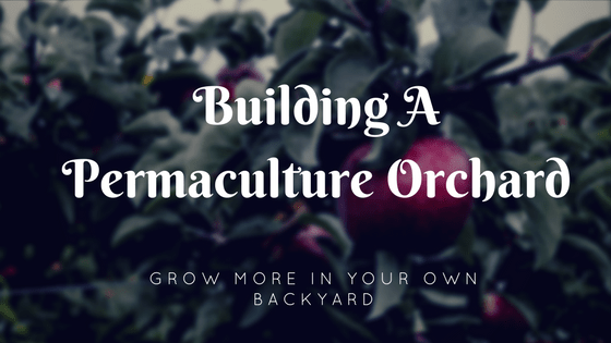 backyard permaculture orchard