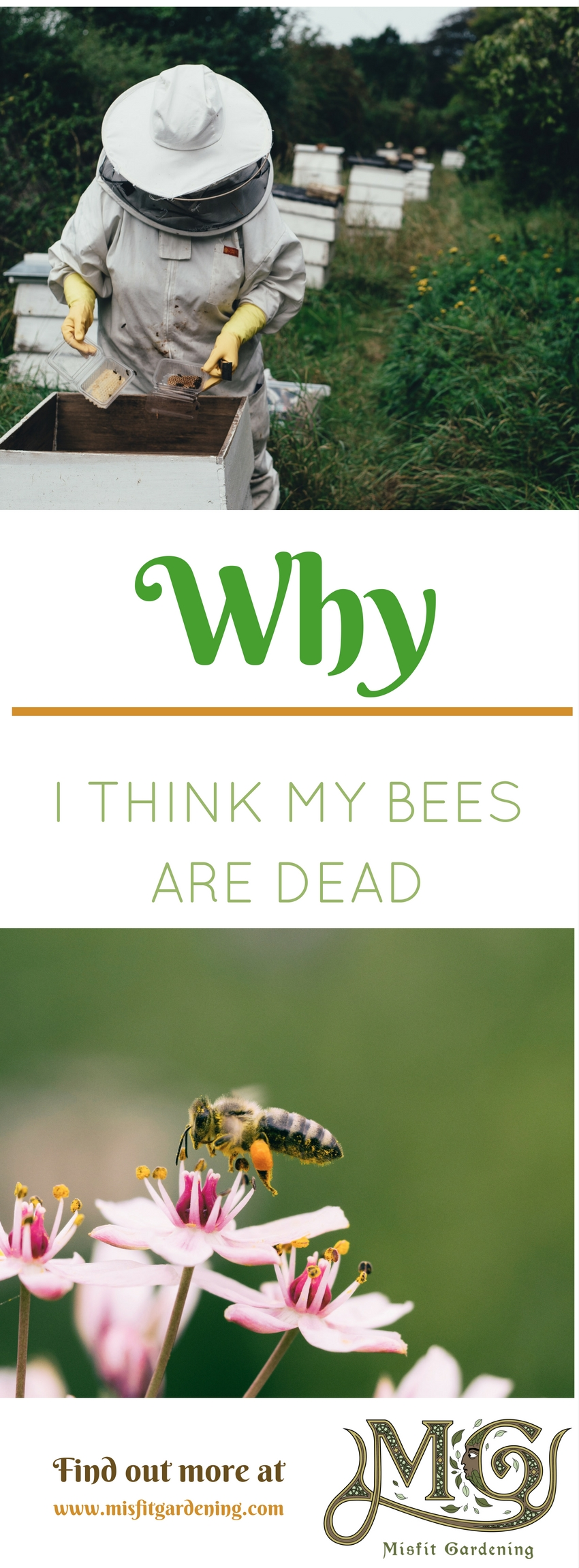 I found dead bees at the entrance to my hive. Click to find out why I think my bees are dead or pin it for later