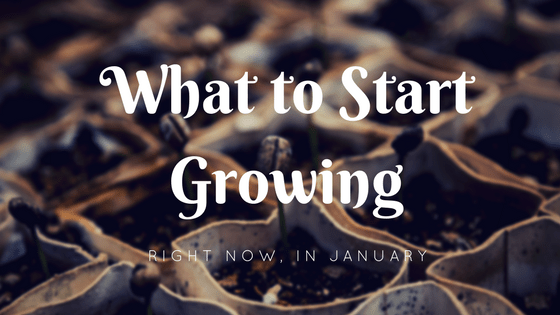 What To Start Growing In January