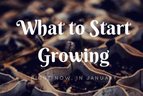 what can you plant in January