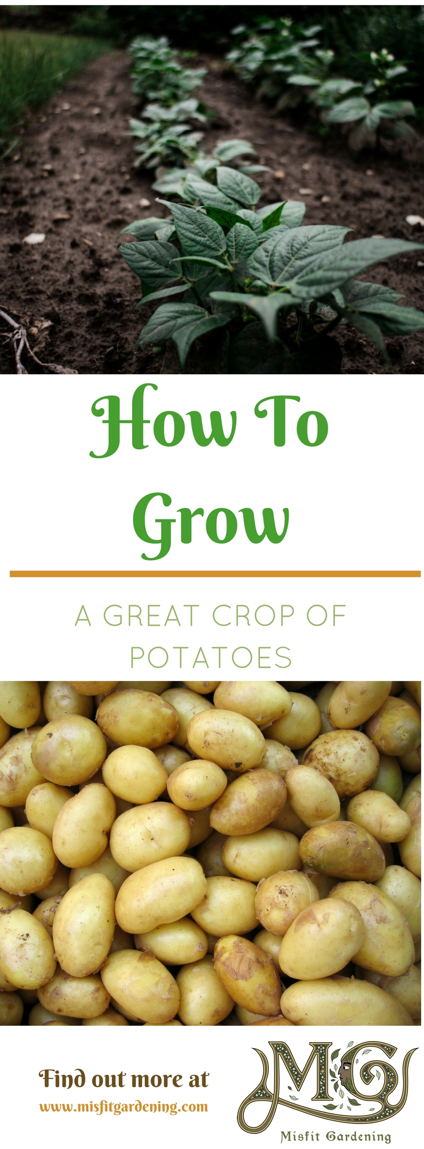 How to grow a great crop of potatoes in your garden. Click to find out about growing potatoes or pin it and save for later
