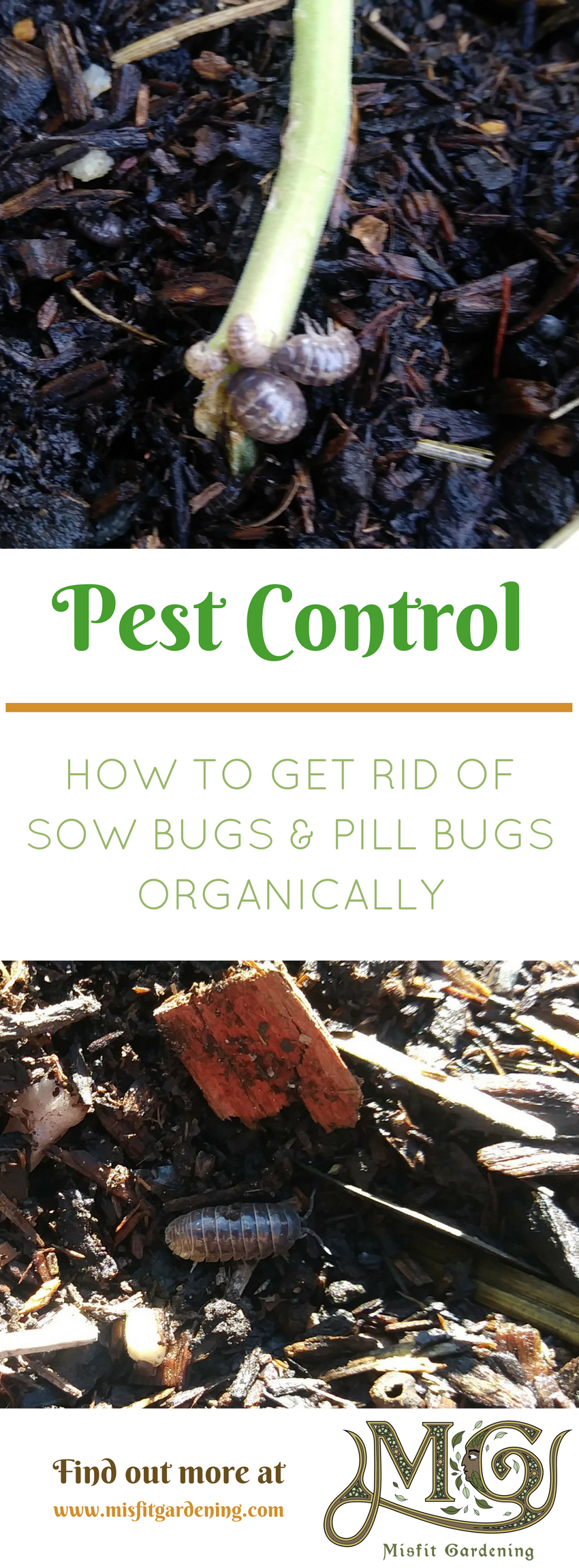 How do you get rid of sow bugs misfit gardening - How to get rid of bugs in garden ...