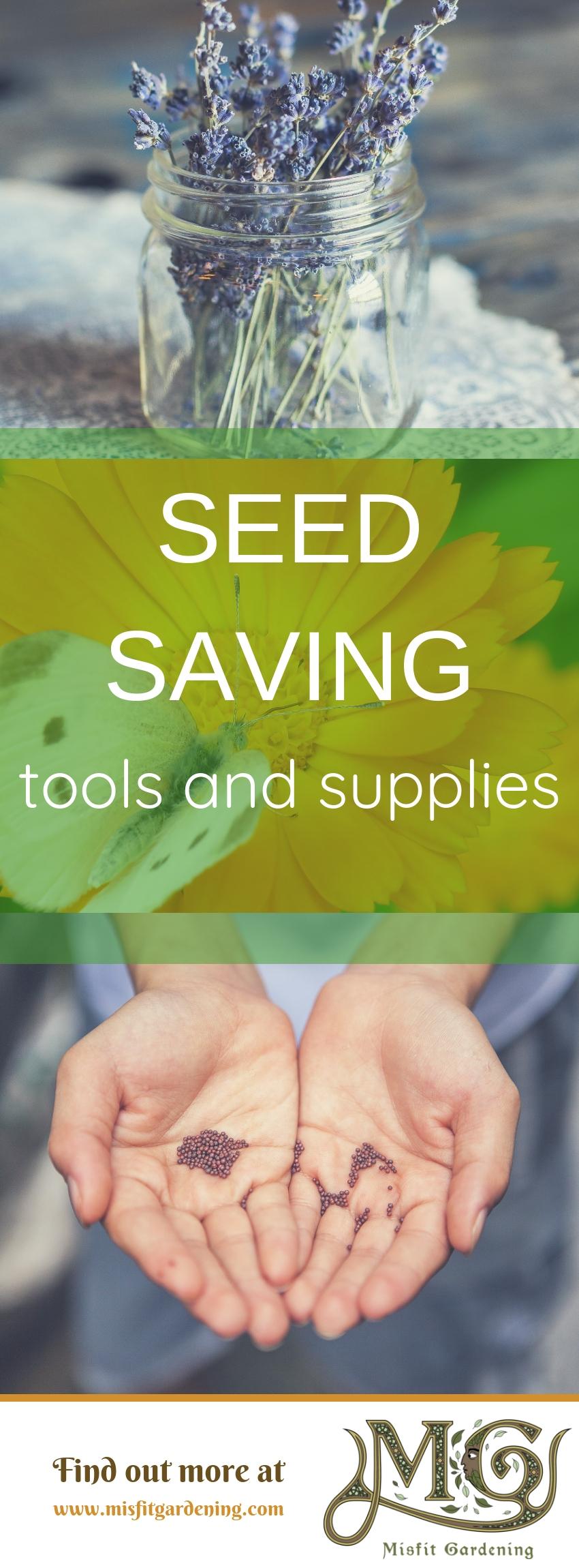 Informieren Sie sich über günstige und einfache Saatgutsparvorräte und -werkzeuge, mit denen Sie offen bestäubtes Saatgut sparen können. Klicken Sie hier, um mehr zu erfahren, oder stecken Sie es ein und speichern Sie es für später. #gardening #seedsaving #homestead