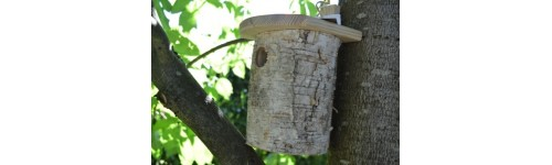 Casitas para animales: pájaros, mariquitas, mariposas y abejas