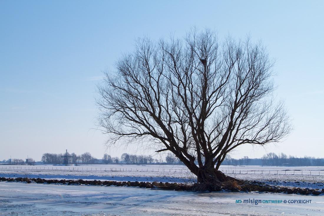 Boom zonder blaadjes aan de rand van een bevroren ringvaart bij De Kaag. Winter. 5184 x 3456 pixels