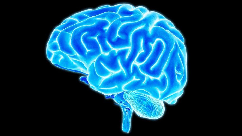 Michael Maninno brain misophonia research connectivity neuroscience